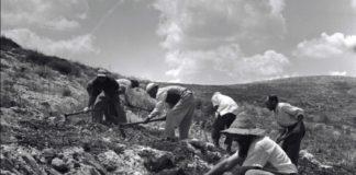 Baumpflanzungen in Gilboa, ca 1960. Foto משה שוויקי -via PikiWiki - Israel , Gemeinfrei, Wikimedia Commons.