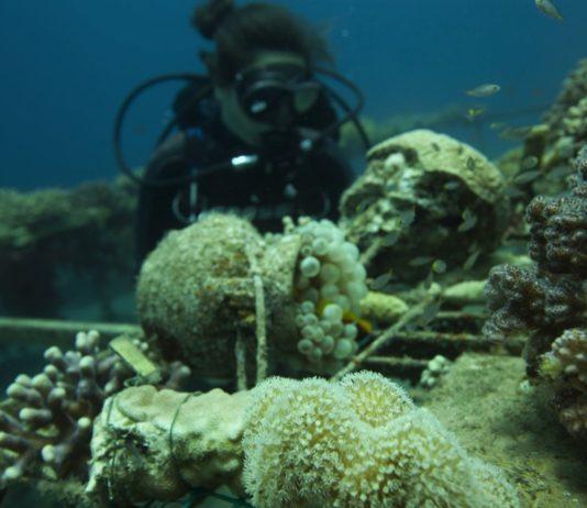 Korallenriffe im Golf von Eilat (Golf von Aqaba). Foto École polytechnique fédérale de Lausanne.