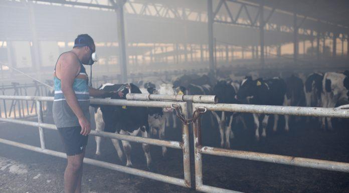 Rauch füllt den Kuhstall im Kibbuz Nahal-Oz, während Feuerwehrleute einen Brand bekämpfen, der durch eine Brandstiftung aus Gaza am 21. Juli 2018 ausgelöst wurde. Foto Gili Yaari/FLASH90