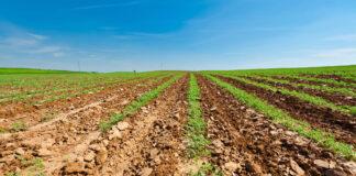 Karotten Setzlinge in Israel. Foto IMAGO / YAY Images